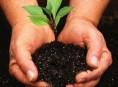 imagen Abonos orgánicos: receta casera
