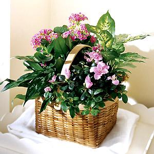 Jardineria y plantas febrero 2012 - Plantas de interior bonitas ...