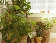 imagen Plantas de interior: cuidados básicos
