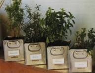 imagen Hierbas aromáticas o medicinales