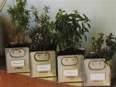 Huerto familiar cultivo de hierbas arom ticas y - Plantas aromaticas en la cocina ...