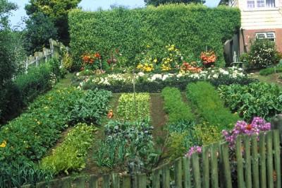Consejos pr cticos para el huerto casero gu a de jardiner a for Vivero organico