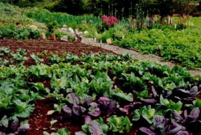 Consejos pr cticos para el huerto casero - Que plantar en el huerto ...