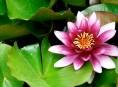 imagen Las plantas acuáticas