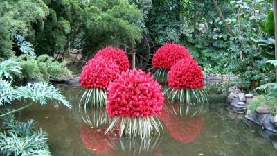 Las plantas acu ticas for Tres plantas ornamentales