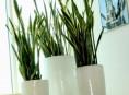 imagen Plantas de interior: cultivo en maceta