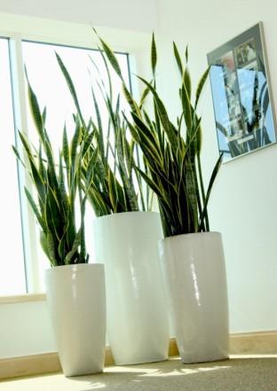 Plantas De Interior Cultivo En Maceta