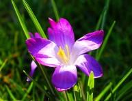 imagen Trastornos y soluciones de las violetas