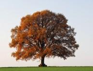 imagen Cómo elegir un árbol