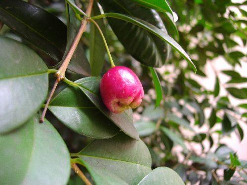 Jardineria y plantas eugenia for Jardineria y plantas