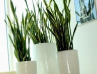 imagen Iluminacion de la plantas de interior