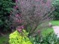 imagen Qué es un arbusto