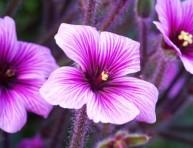 imagen Cuidados del jardín en verano