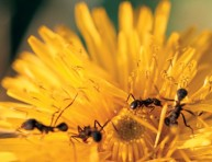 imagen Eliminemos las hormigas del jardín – Segunda Parte