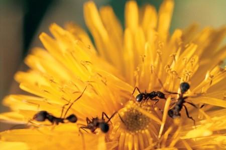 hormigas-03