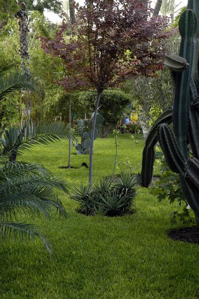 jardin-majorelle-19