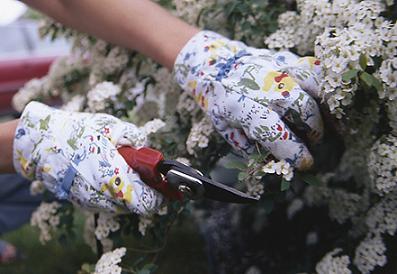 como-se-cortan-las-flores-01