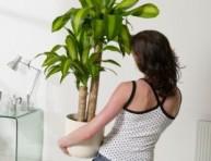imagen Las plantas y sus lugares
