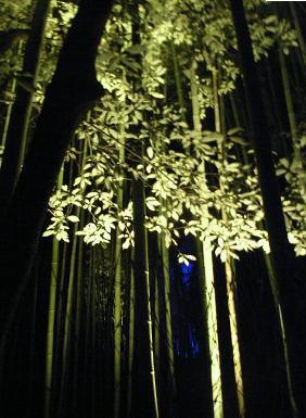 luces-en-tu-jardin-06