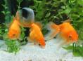 imagen Plantas acuáticas para tu acuario