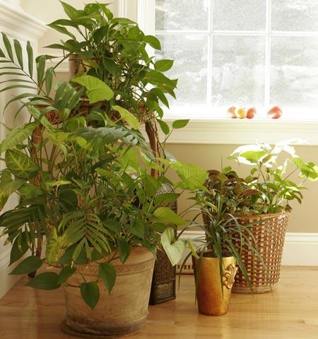 Plantas de interior cuidado de plantas page 2 - Plantas de interior para salon ...