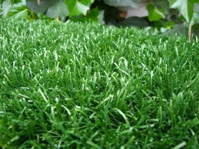 Abono casero para tu c sped consejos for Como plantar cesped natural