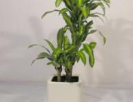 imagen Si tus plantas no crecen