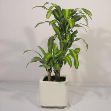 si-tus-plantas-no-crecen-01