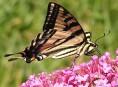 imagen Como atraer mariposas al jardín