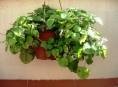 imagen Cuida tus plantas de interior
