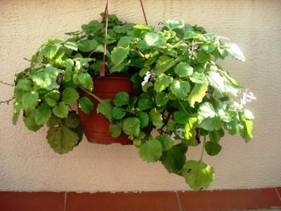 cuida-tus-plantas-de-interior