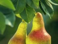 imagen Cuidados de los frutales
