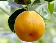 imagen Llevar la alegría de los frutales al jardín