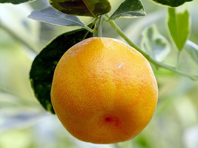 llevar-la-alegria-de-los-frutales-al-jardin