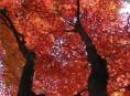 imagen Árboles: los infaltables del jardín