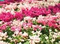 imagen Los colores de las flores y los estados de ánimo