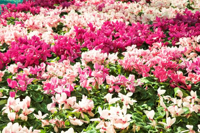 los-colores-de-las-flores-y-los-estados-de-animo