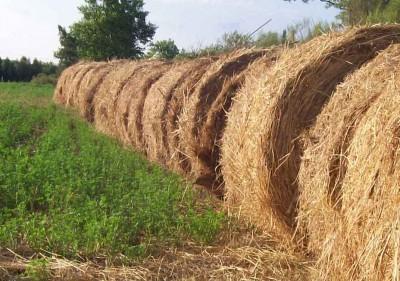 nutricion-organica-de-los-suelos-p3-01