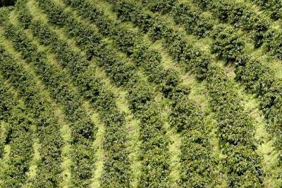 nutricion-organica-de-los-suelos-pII-01
