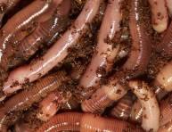 imagen Nutrición orgánica de los suelos – Parte II