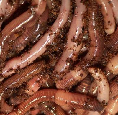 nutricion-organica-de-los-suelos-pII-03
