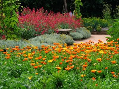 porque-elegir-herbaceas-y-bulbosas-para-nuestro-jardin-01