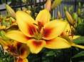 imagen Porque elegir herbáceas y bulbosas para nuestro jardín