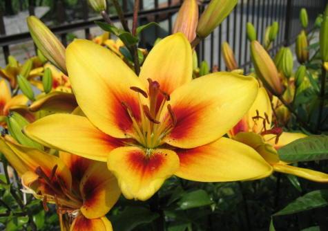 porque-elegir-herbaceas-y-bulbosas-para-nuestro-jardin-02
