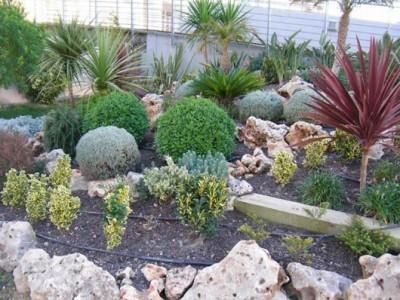 Como tener un jardin de rocalla parte dos for Plantas para rocallas