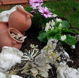como-tener-un-jardin-de-rocalla-p3-01
