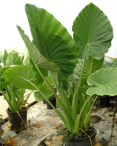 Plantas de exterior resistentes a temperaturas extremas - Plantas para exterior ...