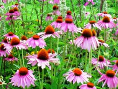 plantas-combaten-gripe.p1-03