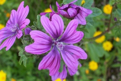 plantas-combaten-la-gripe-p3-01