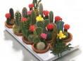 imagen Todo sobre cactus y suculentas – Parte I